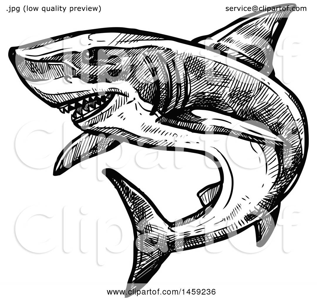 Clipart Of A Sketched Shark In Black And White
