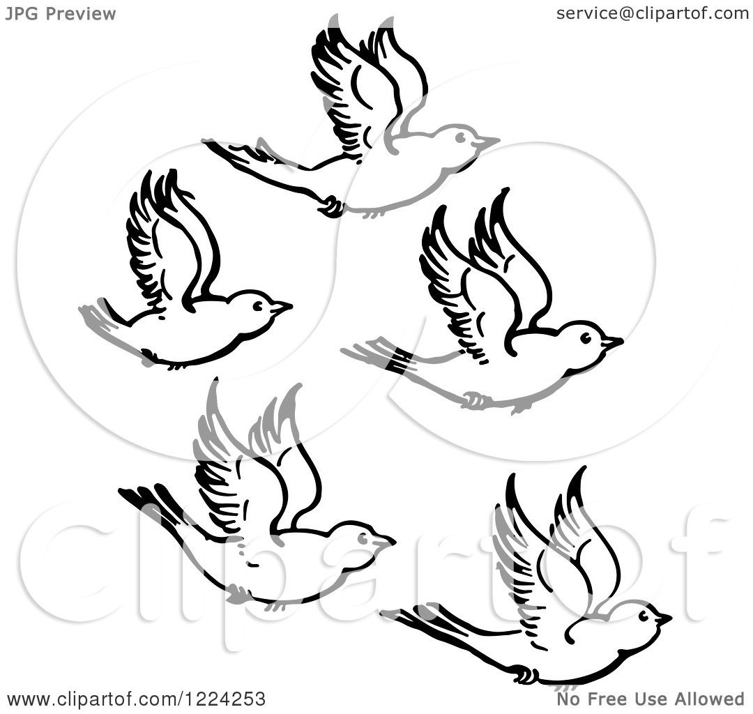 Clipart Of Black And White Five Flying Birds