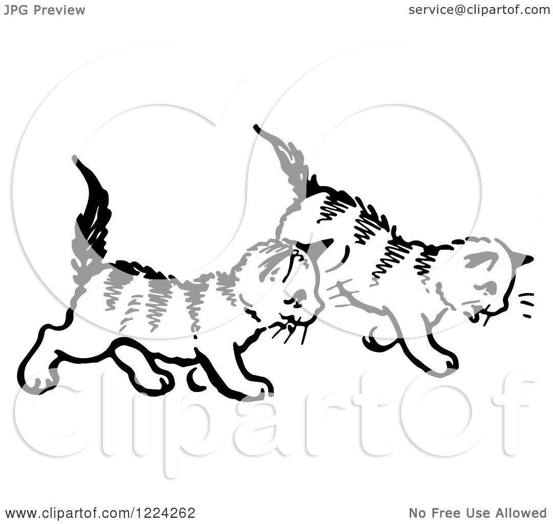 Kitten Clip Art Bw Cliparts