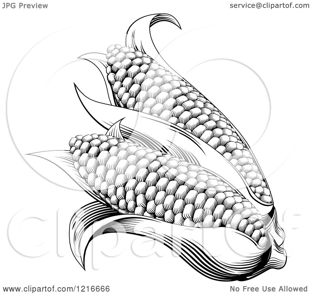 Clipart Of Vintage Woodcut Styled Ears Of Corn In Black