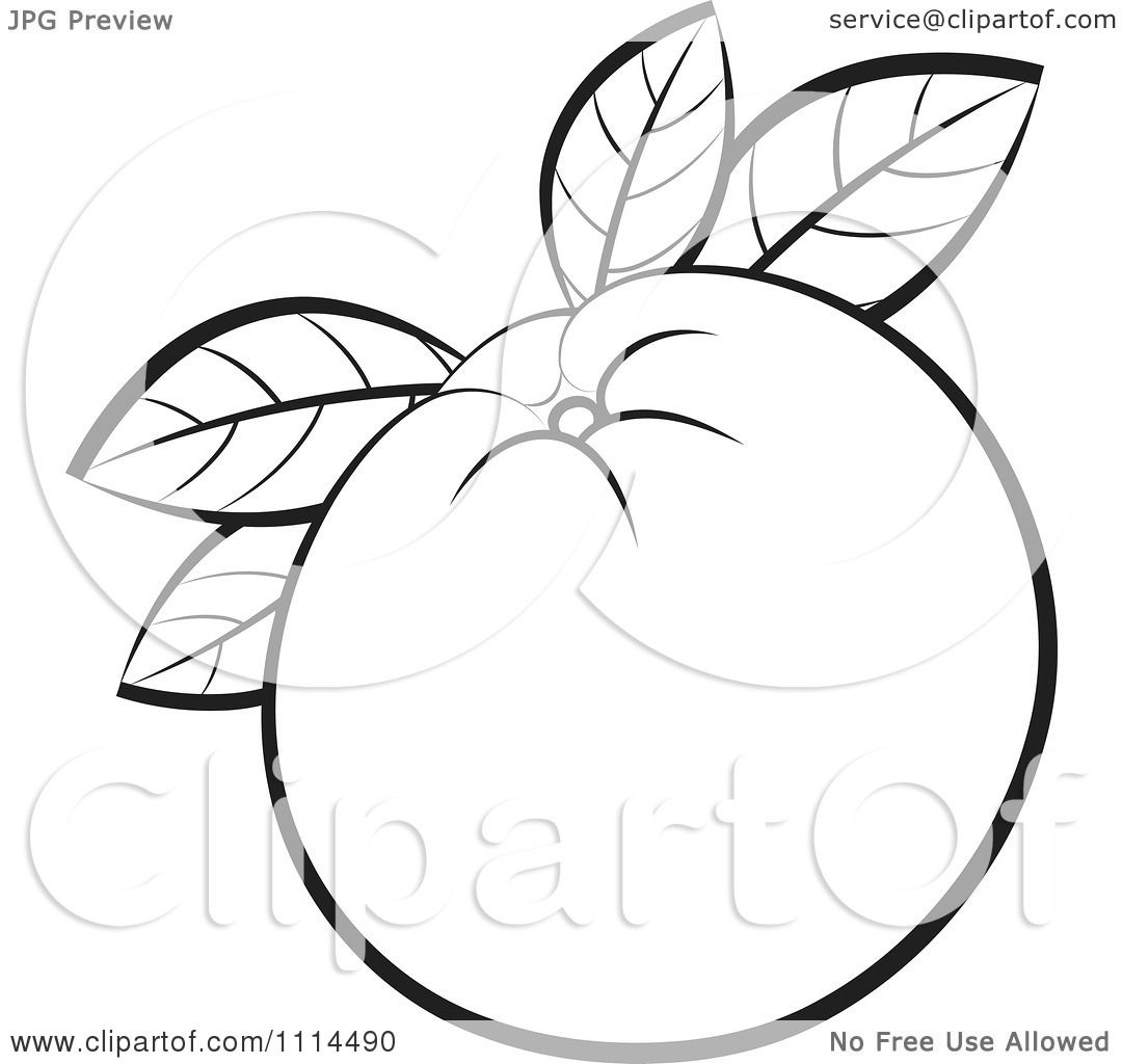 Clipart Outlined Orange Fruit With Leaves