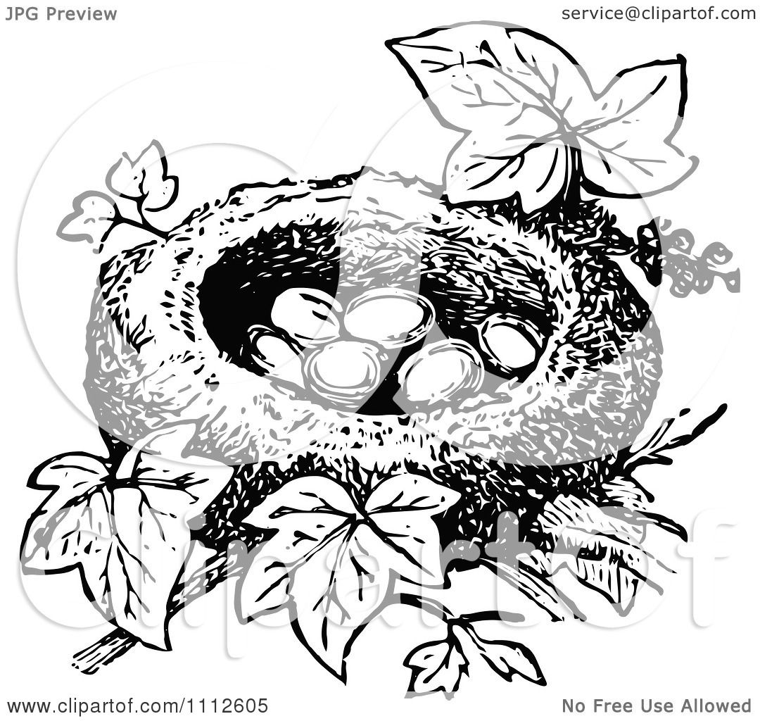 Clipart Retro Black And White Bird Nest With Eggs