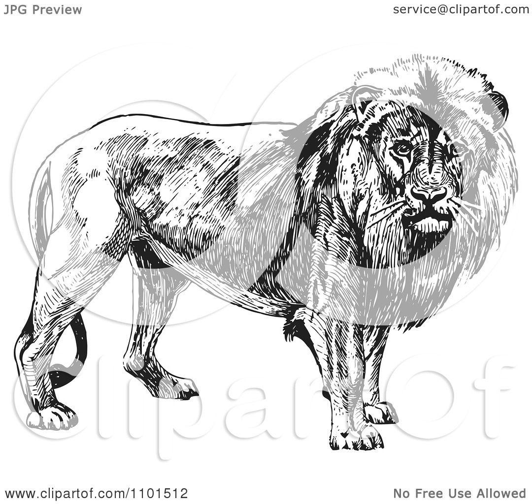 Clipart Retro Black And White Male Lion