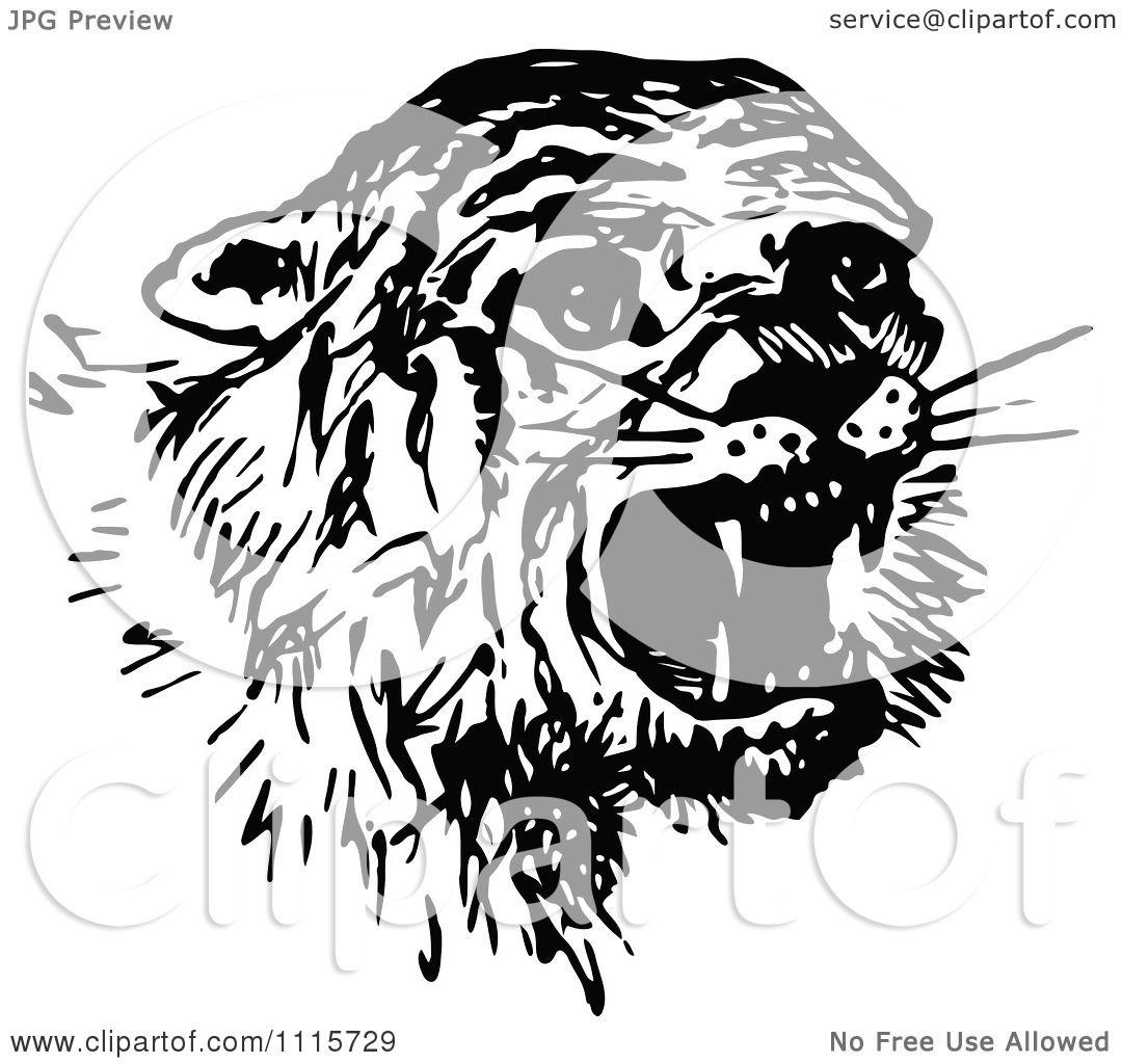 not a tiger