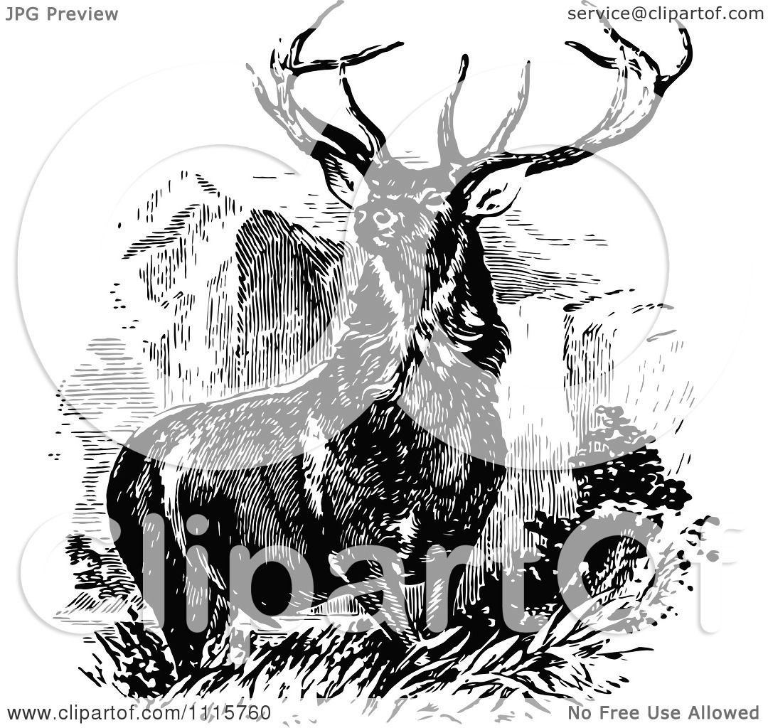 Clipart Retro Vintage Black And White Stag Buck Deer With