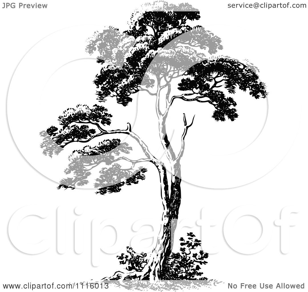 Clipart Retro Vintage Black And White Tree 2
