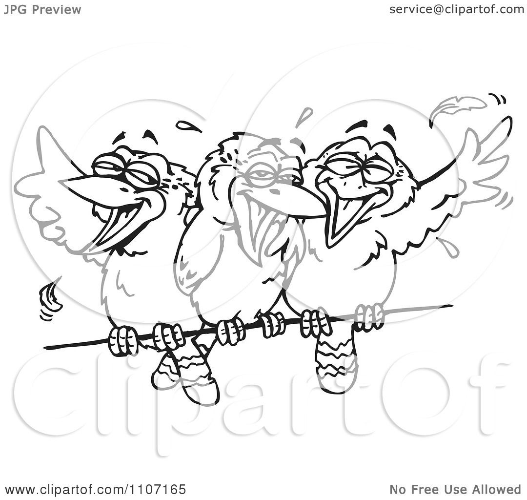 Clipart Three Black And White Kookaburra Birds Laughing On