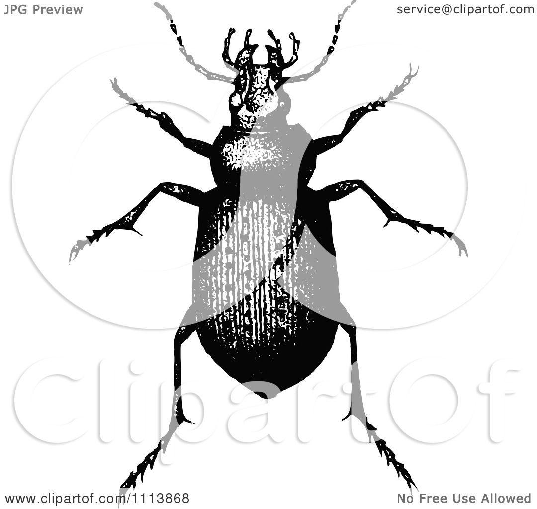 Clipart Vintage Black And White Calosoma Beetle