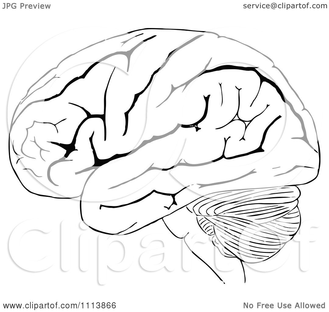 Clipart Vintage Black And White Human Brain 2