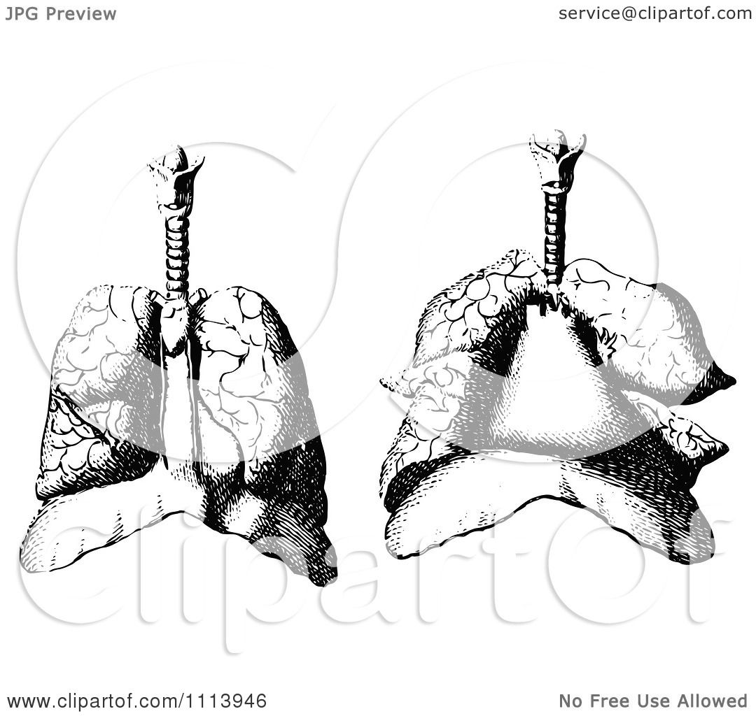 Clipart Vintage Black And White Human Lungs