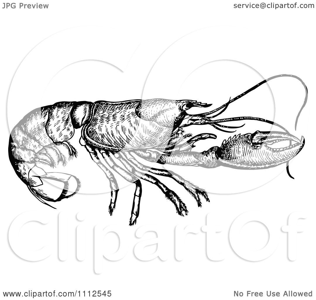 Clipart Vintage Black And White Lobster