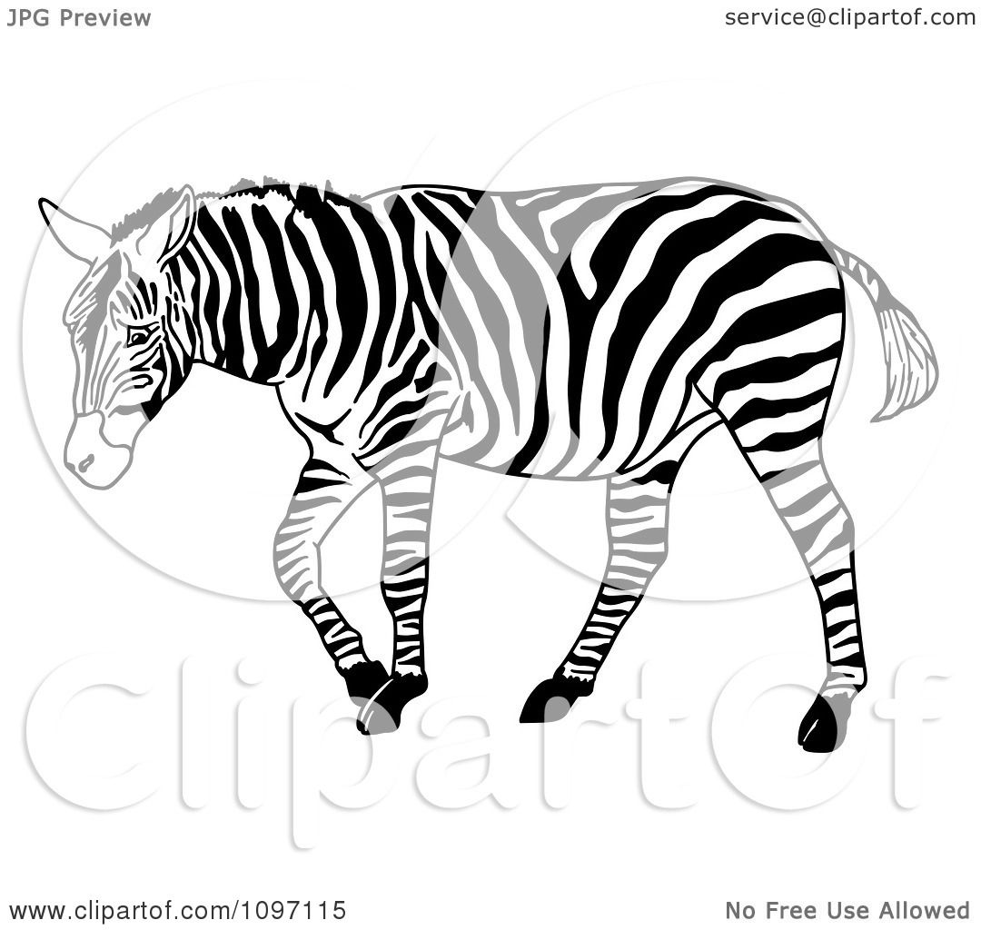 Clipart Walking Zebra