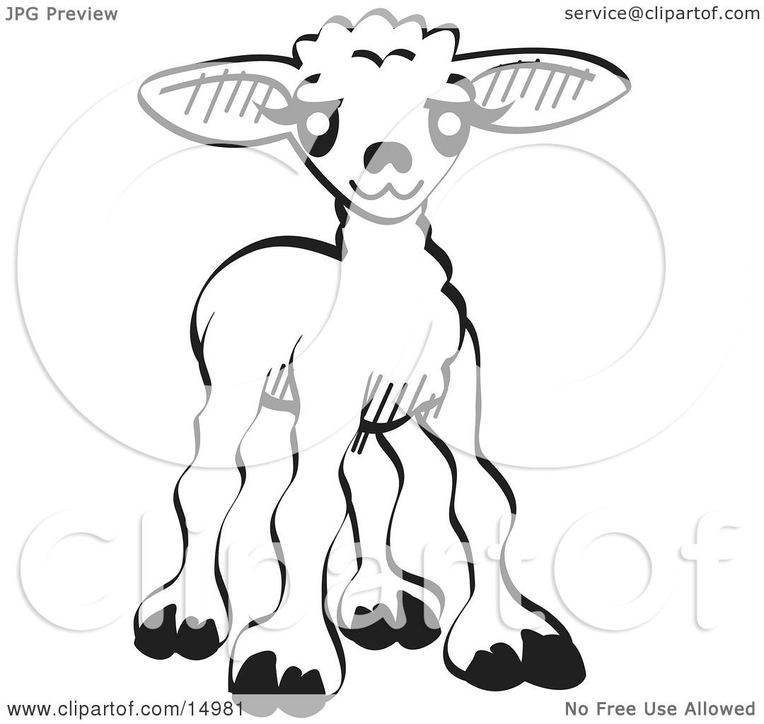 Little Baby Lamb Black And White Clipart Illustration By Andy Nortnik