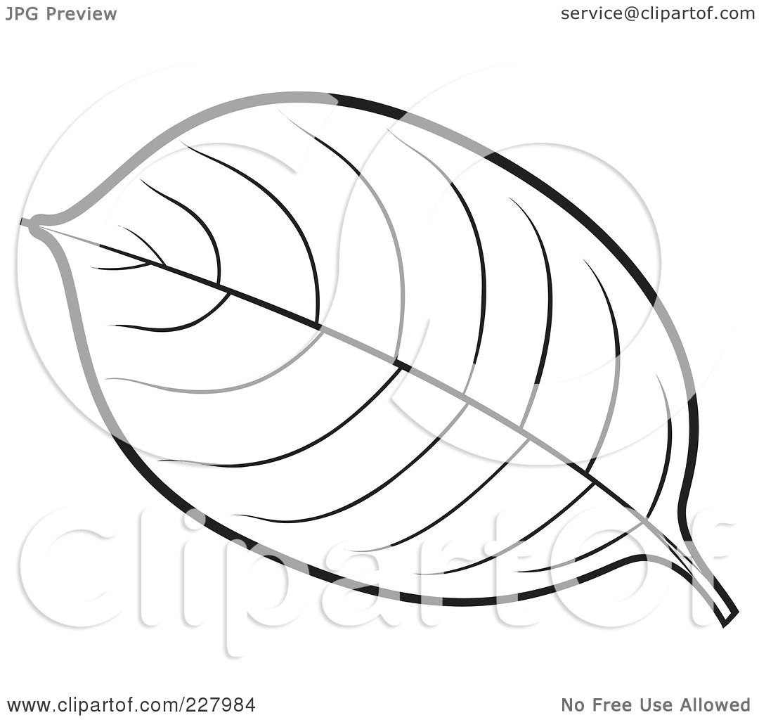 free rf clipart illustration of a coloring page outline of a leaf