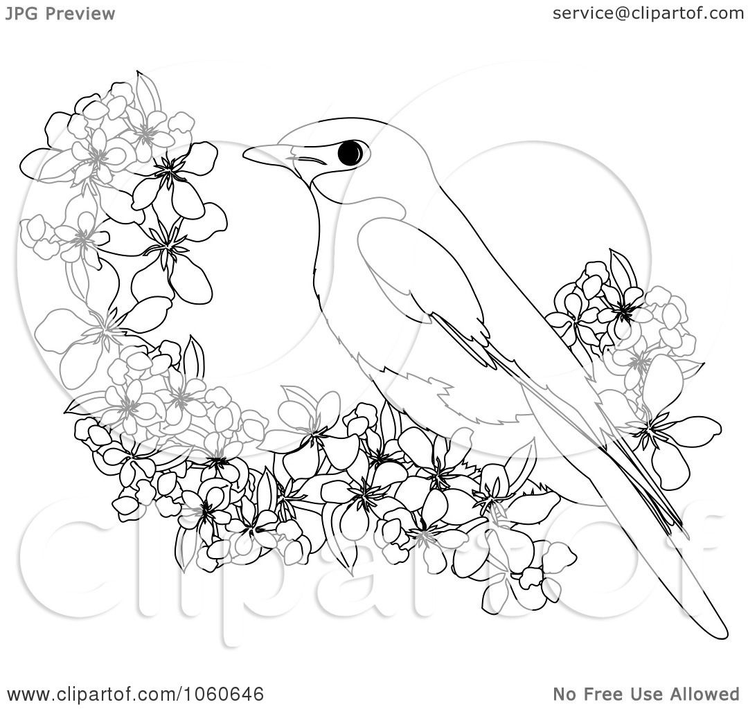 Cardinal Coloring Pages Printable Coloring Pages