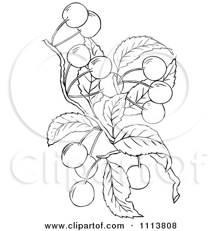 coloring page outline of a cherry tree posters art prints by hit