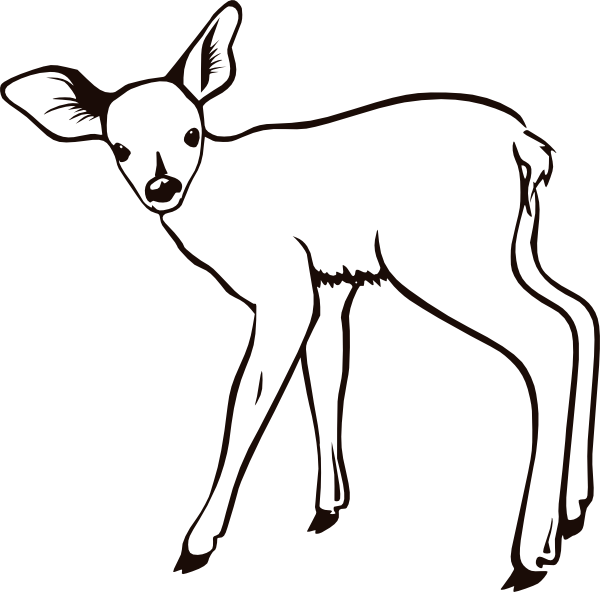 baby deer coloring pages cooloring com