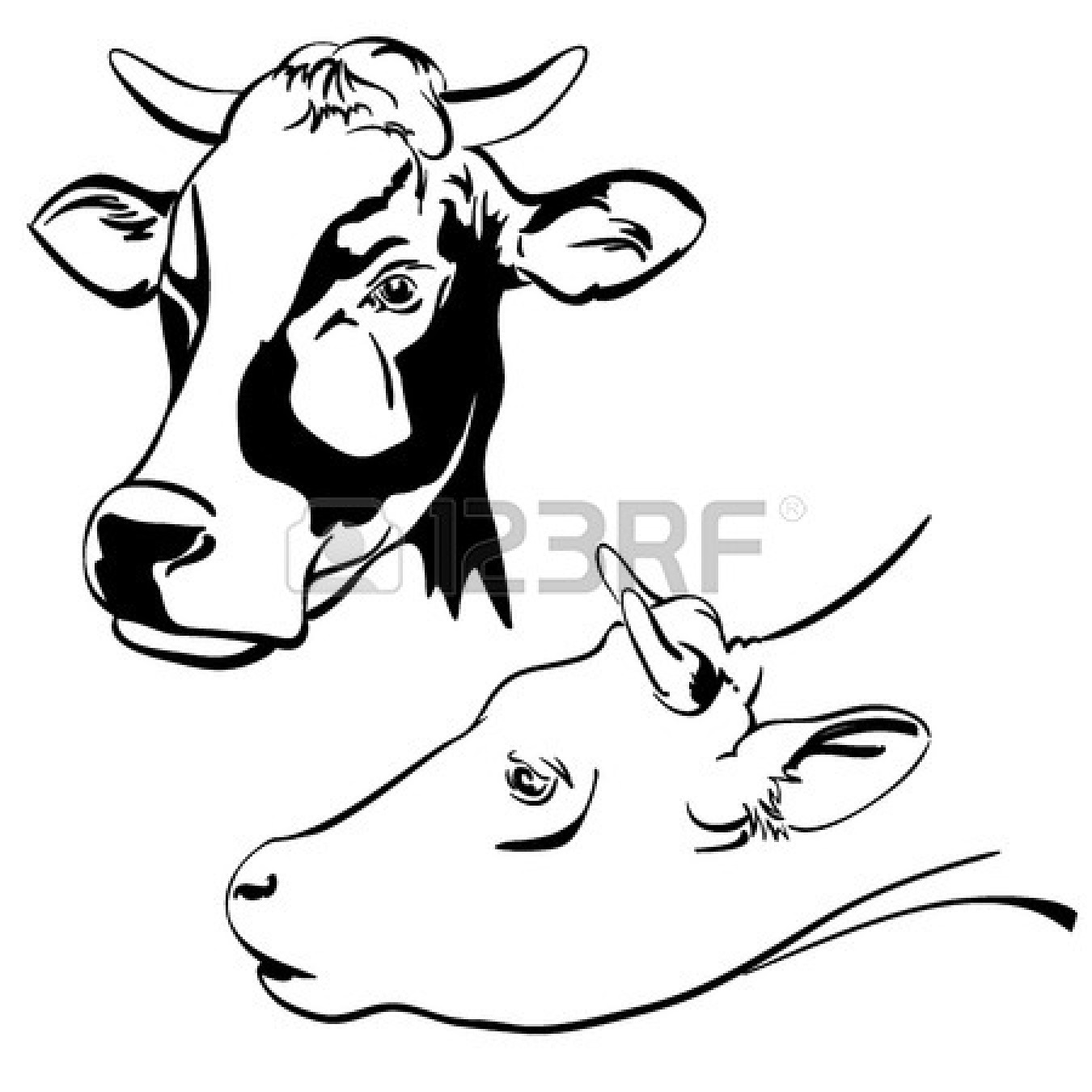 Beef Cow Drawing Clipart Panda