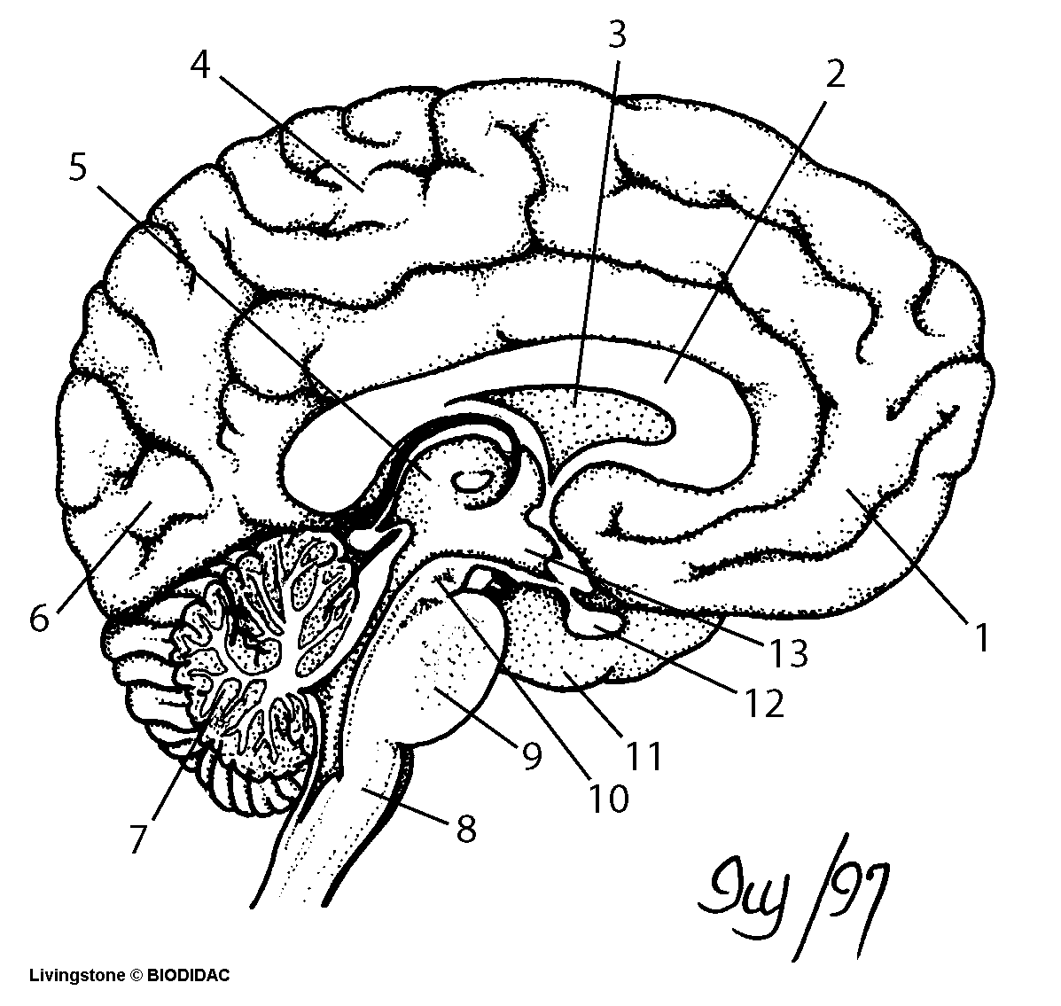 Blank Microscope Diagram Clipart Panda