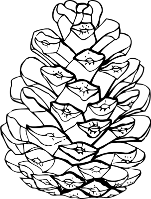 Clip Art Pine Cone Clipart Panda Free Clipart Images