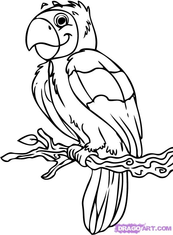 Cute Parrot Drawing Clipart Panda Free Clipart Images