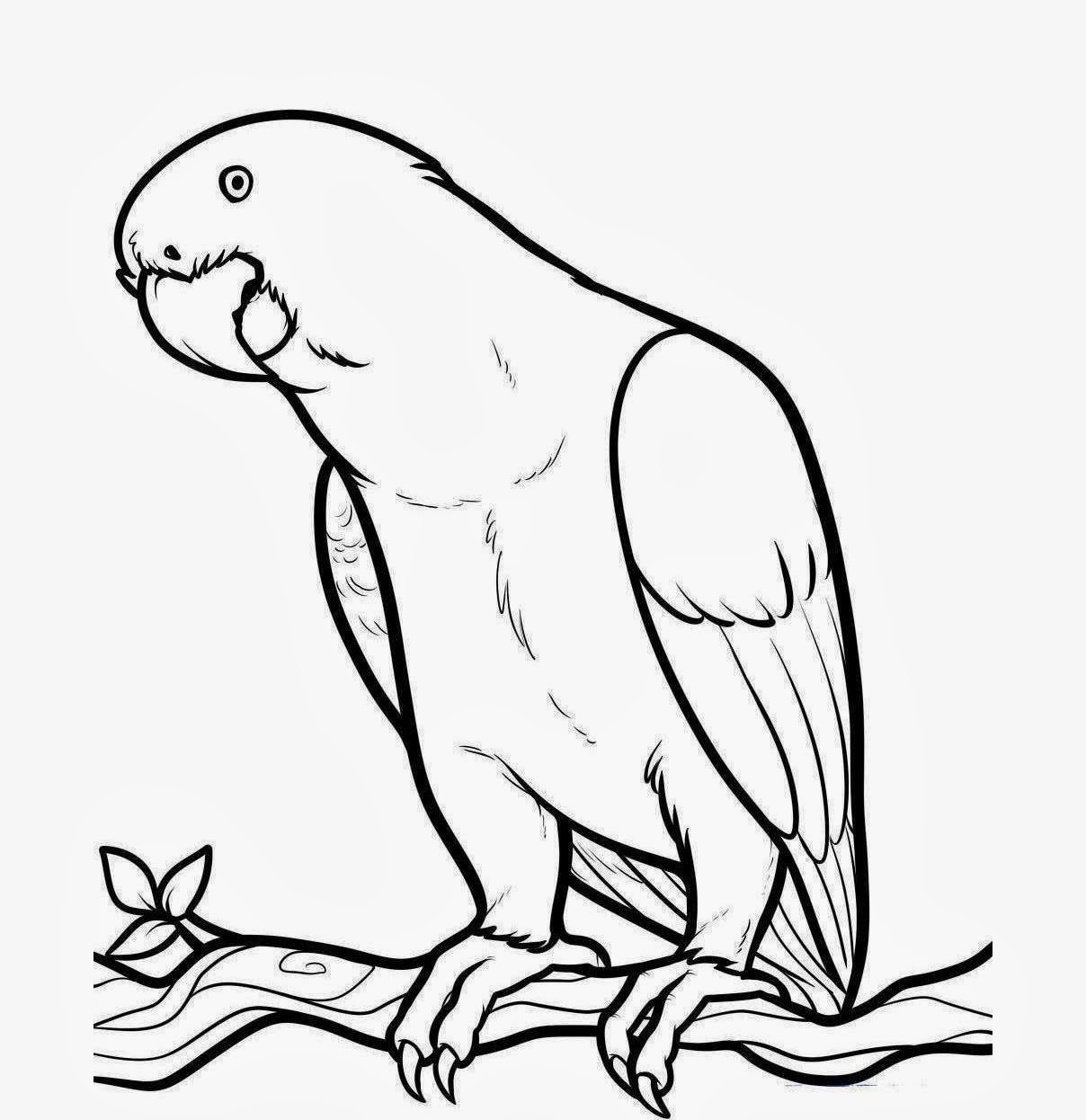Images About Clipart Birds