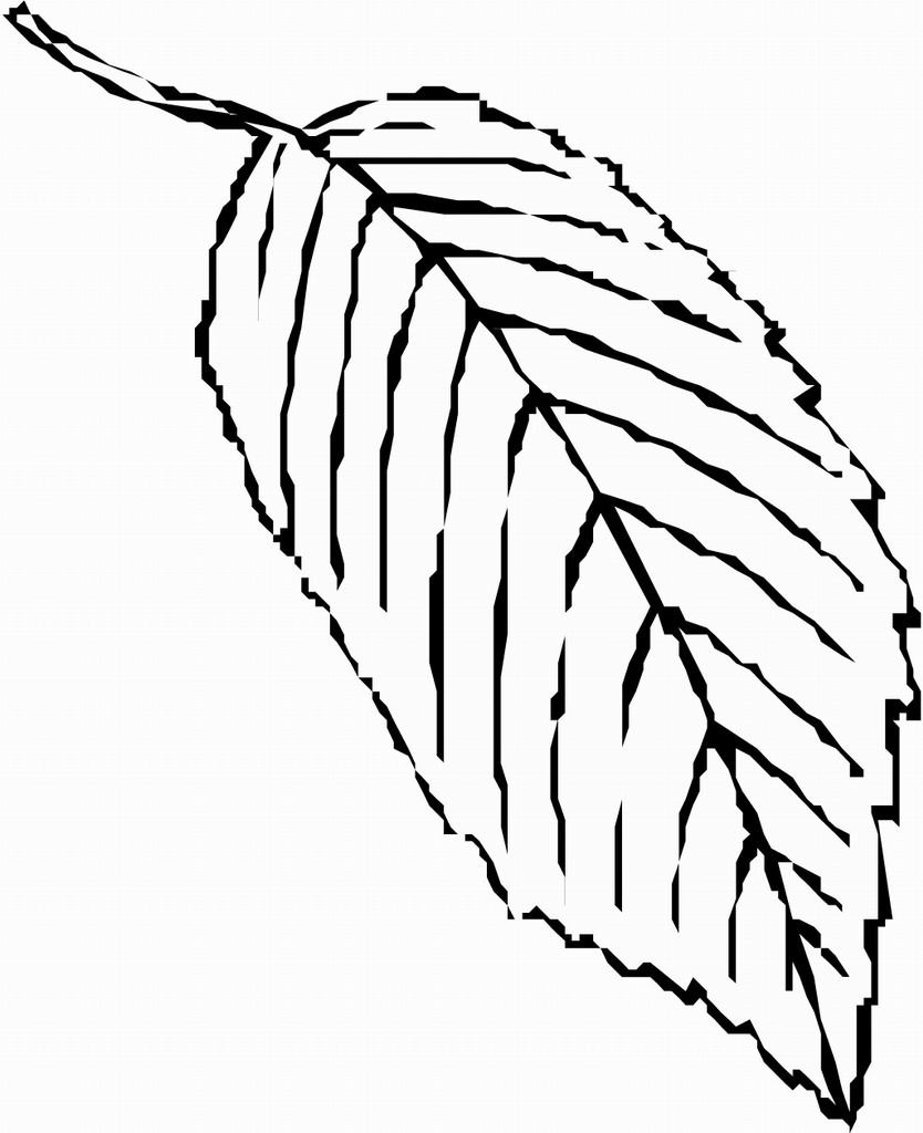 fall leaves coloring pages coloring pages of fall leaves seeds and