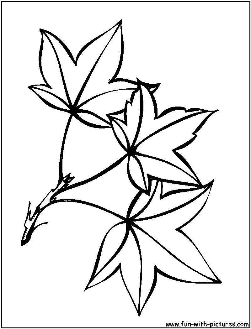 poplar png