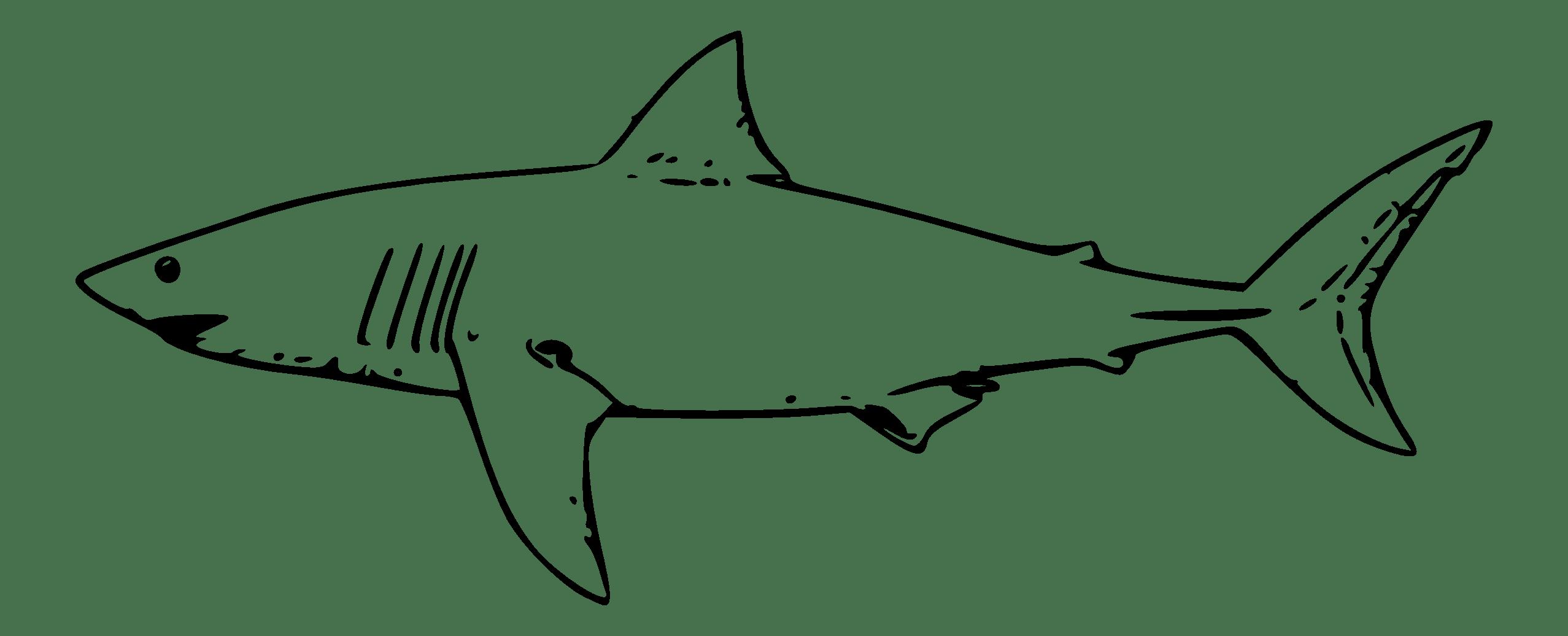 Great White Shark Clip Art Clipart Panda