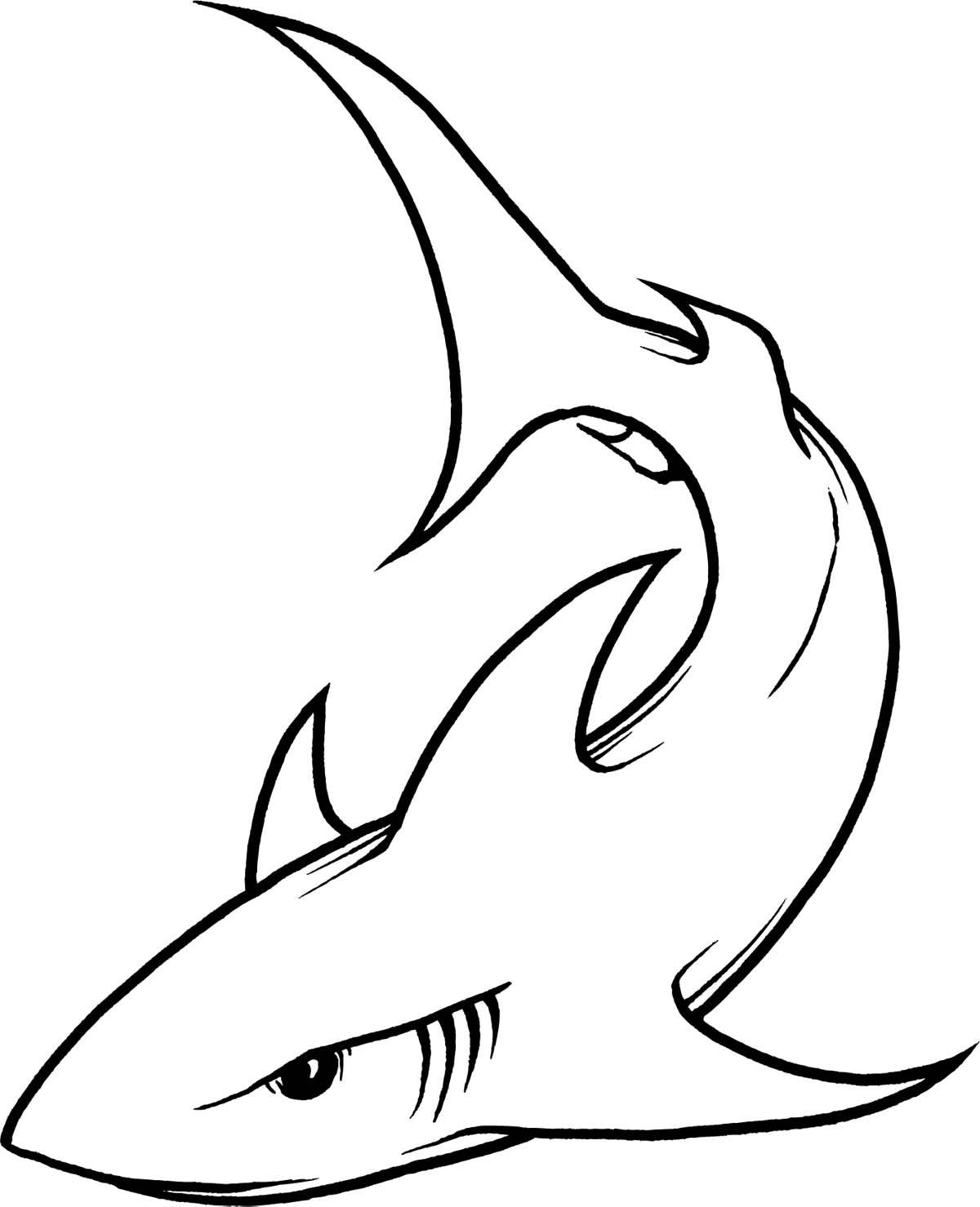 Great White Shark Drawing Clipart Panda