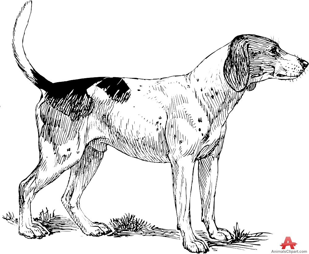 Hound Clipart | Clipart Panda - Free Clipart Images (999 x 822 Pixel)