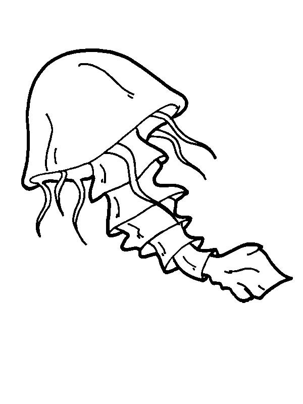 jellyfish coloring page jellyfish with a tail coloring page jpg