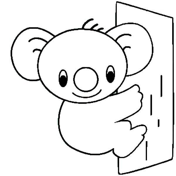 baby koala bear coloring pages cutest wild baby animals listoid