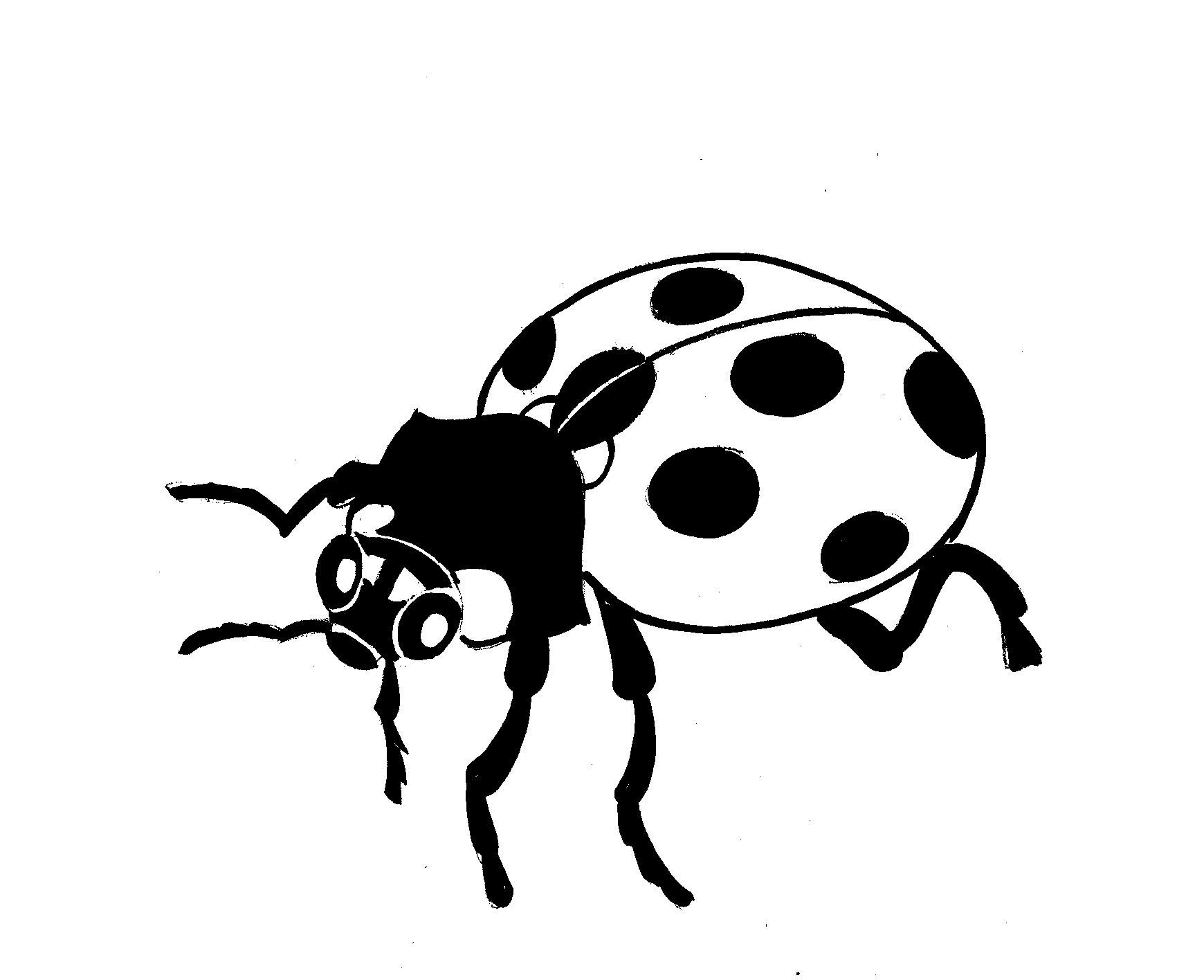 Ladybug Pencil Drawing