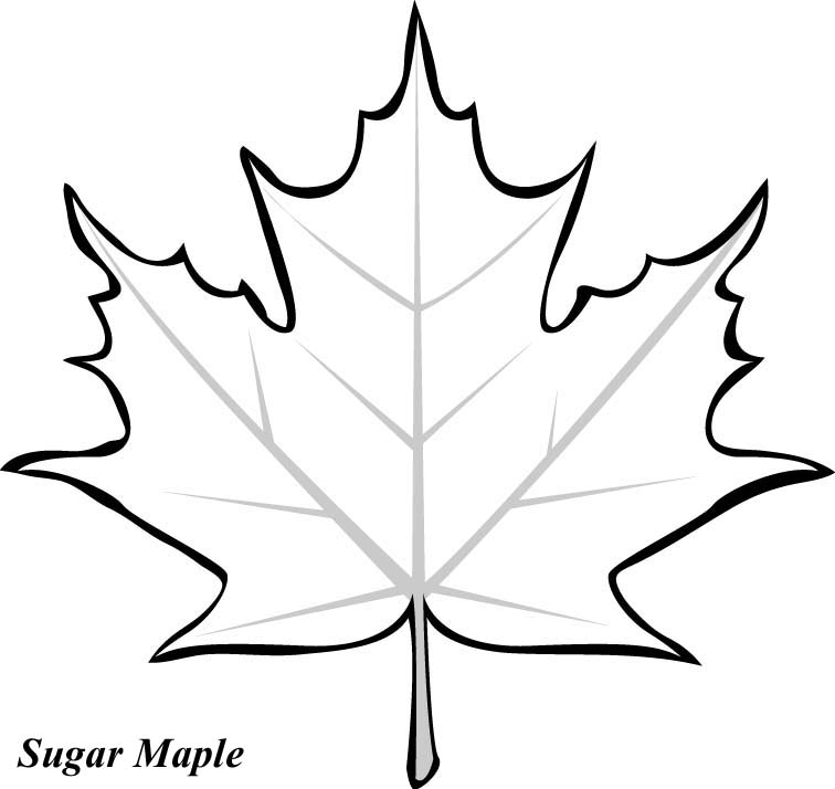 pics photos striped maple leaf coloring page