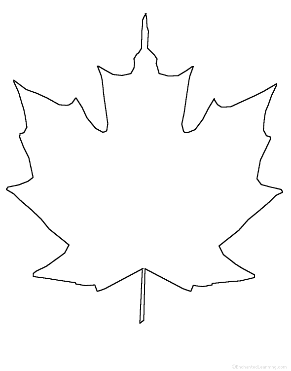 sketches of maple leaves coloring pages