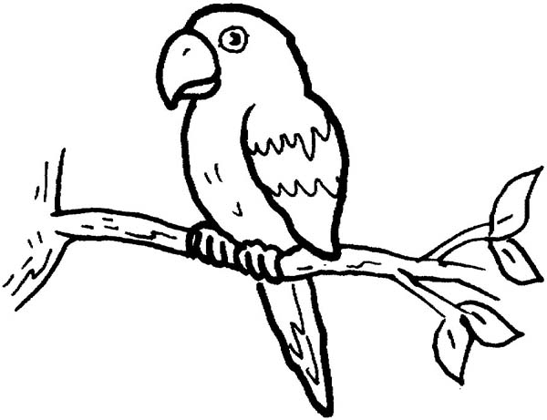 parrot coloring pages little parrot coloring page jpg