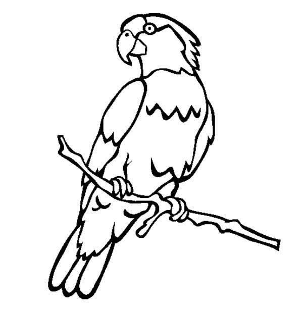 parrot coloring pages male parrot coloring page jpg