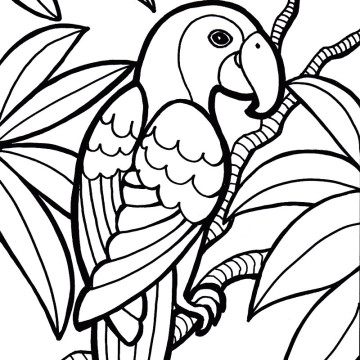 parrot coloring pages parrot bird coloring page 360x360 jpg