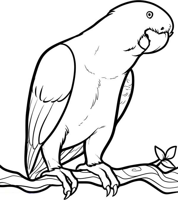 parrot coloring pages parrot looking for food coloring page jpg