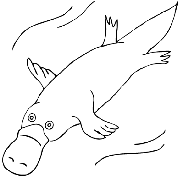 duckbill platypus coloring page.html