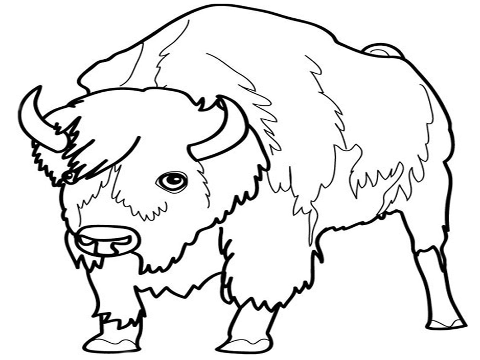 Realistic Frog Coloring Pages Clipart Panda