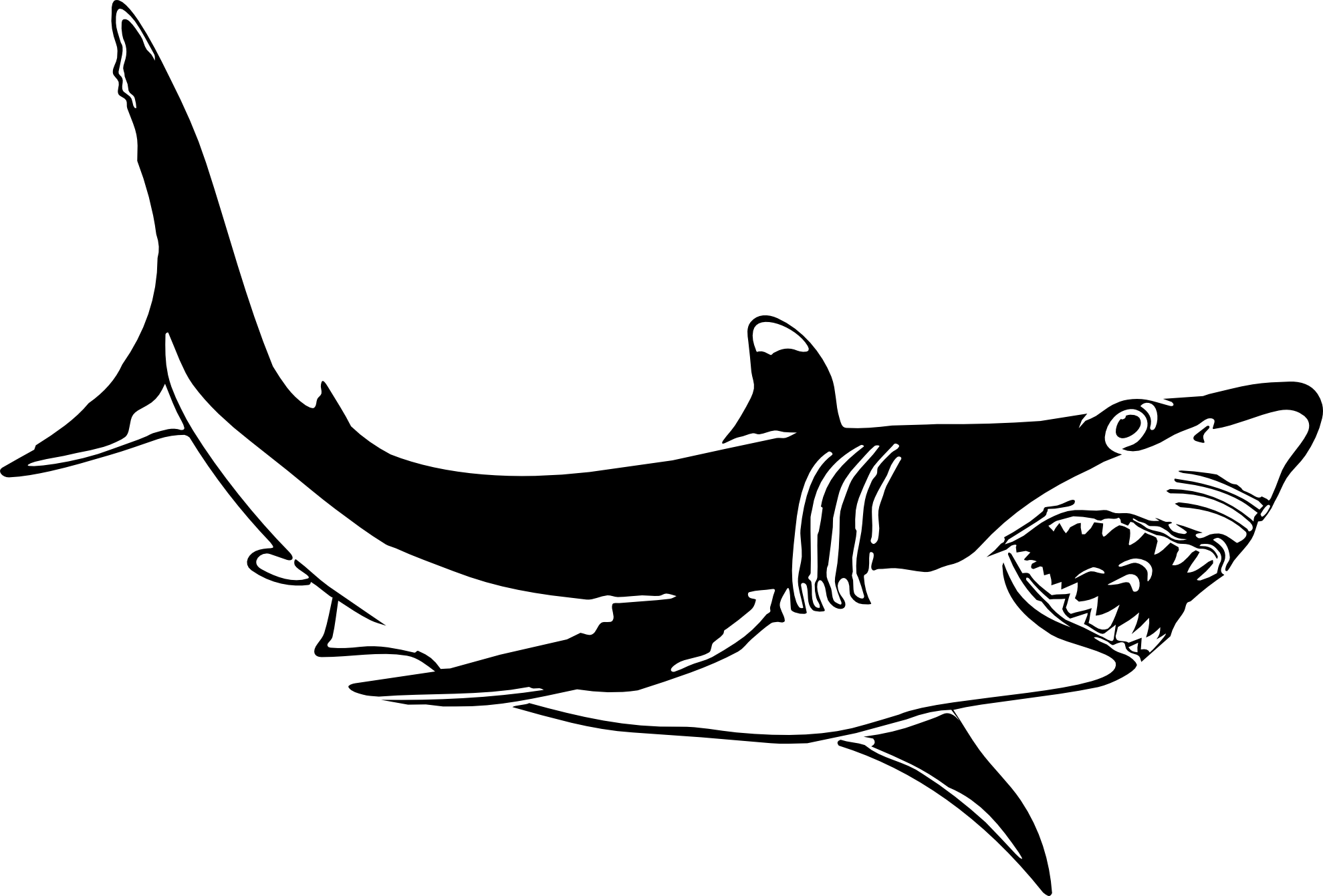 Shark Clipart Black And White Clipart Panda