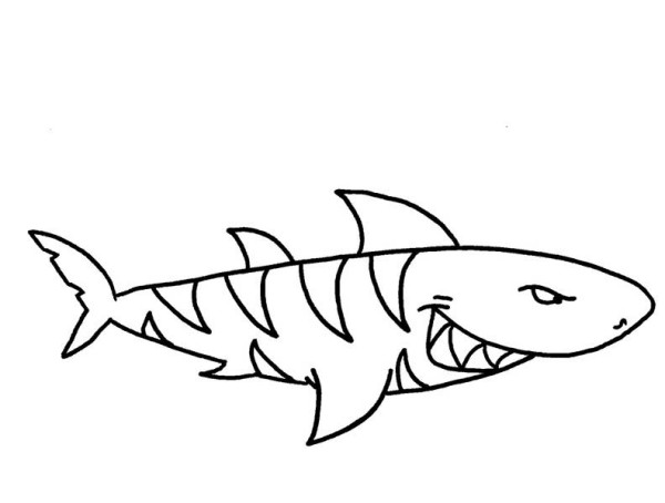 shark coloring pages a threatening tiger shark on hunting coloring