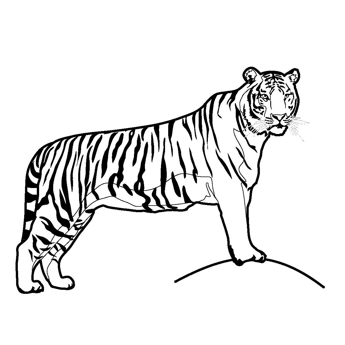 Tiger Clipart For Kids Clipart Panda