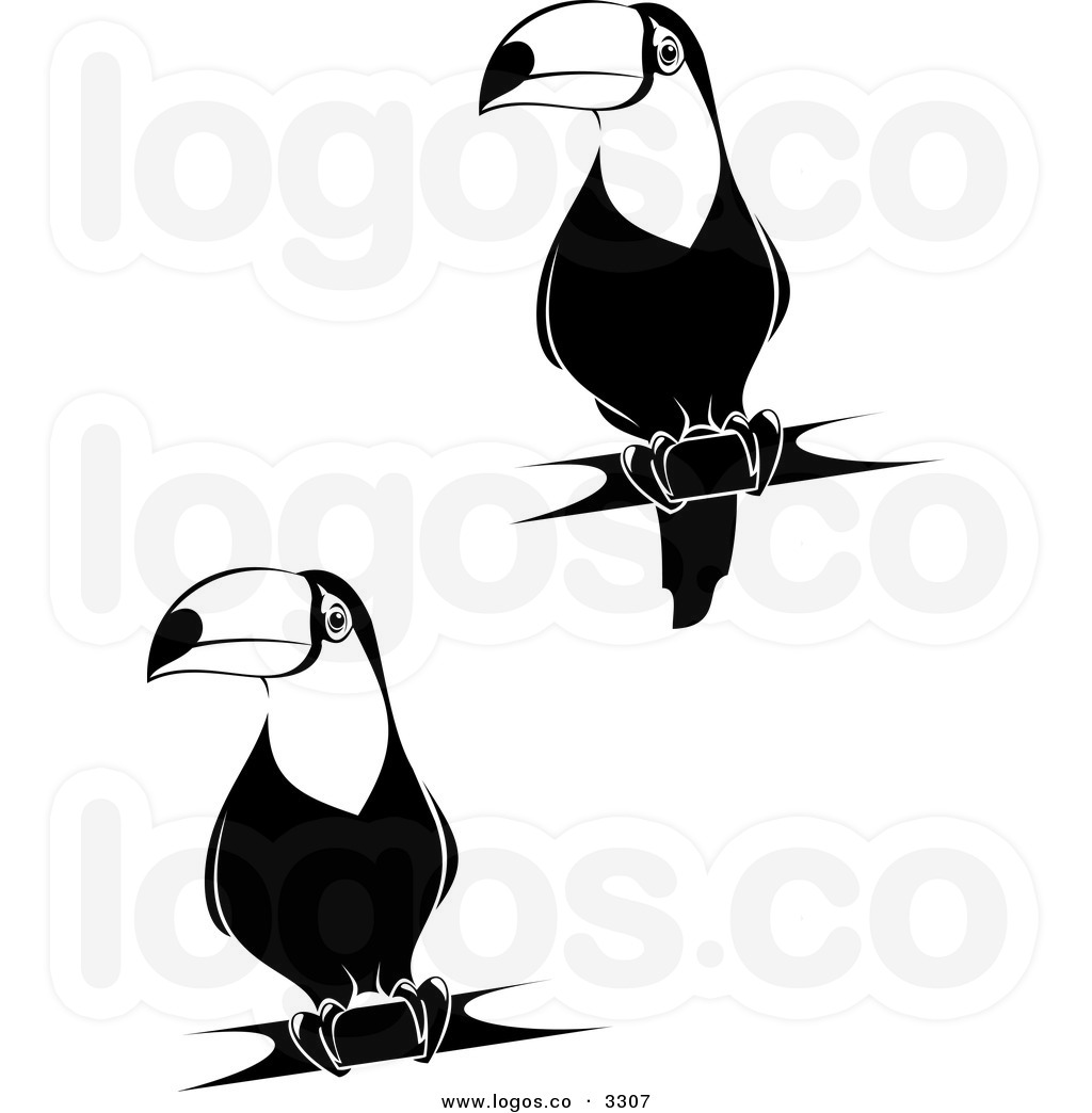 Of Black And White Toucan Clipart Panda
