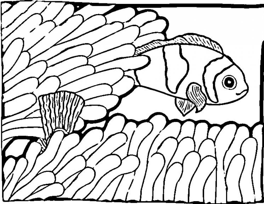Coloring Pages Of Fish For Clipart Panda