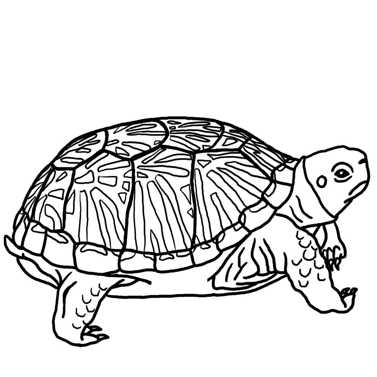 Turtle Clip Art Free Clipart Panda