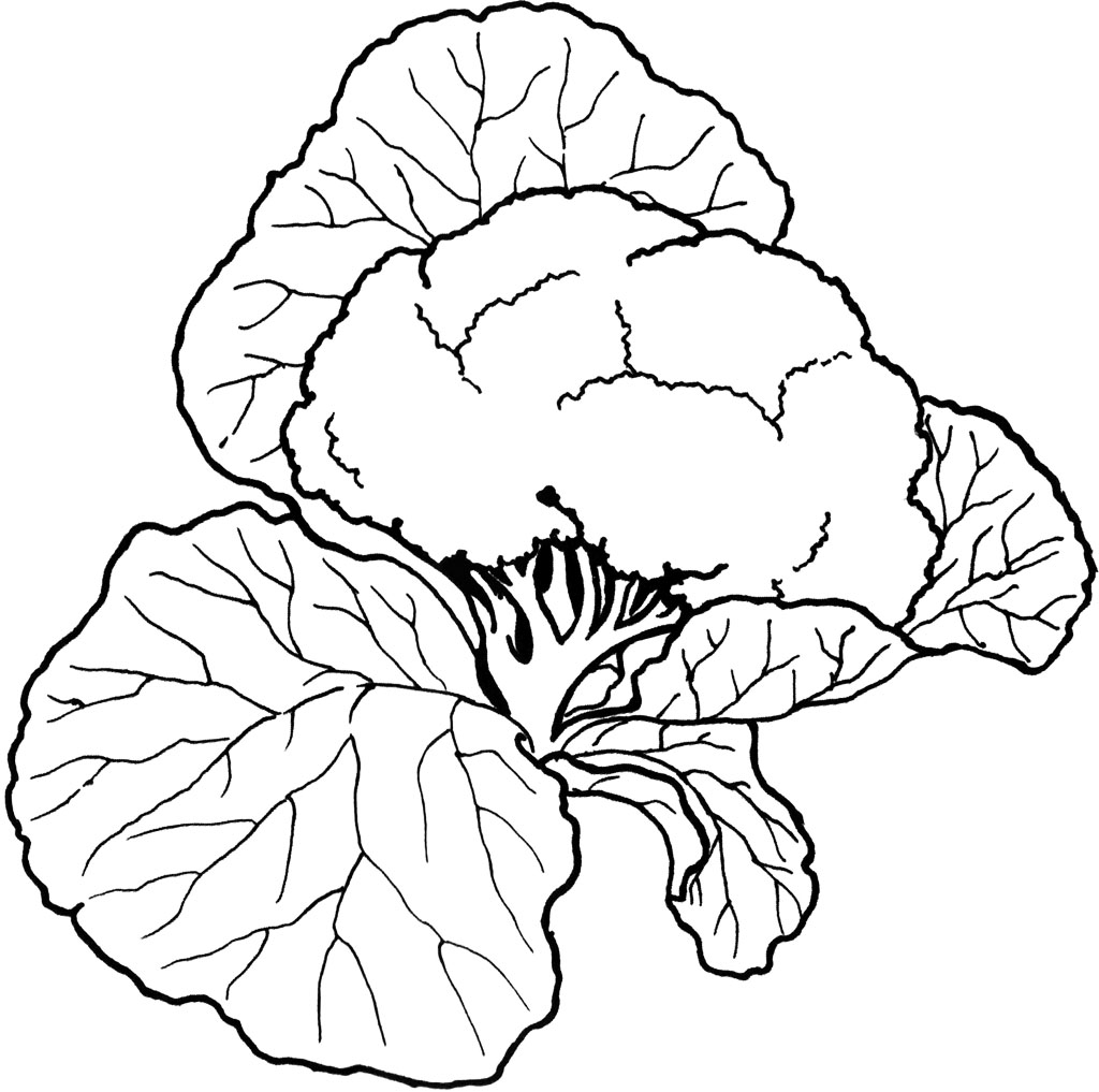 Vegetables Coloring Pictures Clipart Panda