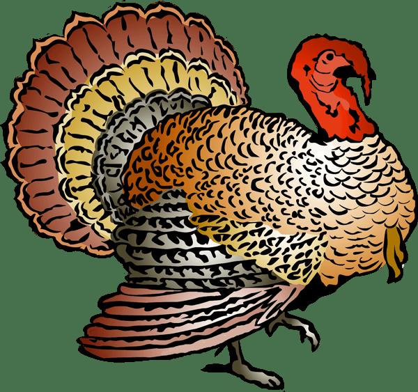 Clip Art of A Colorful Turkey | Clipart Panda - Free ... (600 x 563 Pixel)